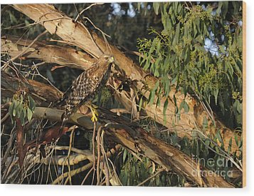 Red Tail Hawk Camouflage Wood Print by Marc Bittan
