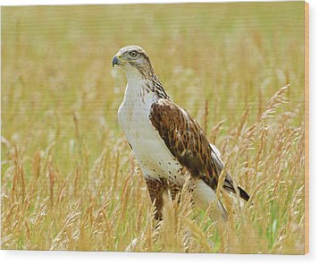 Red Tail Hawk Wood Print by James Steele