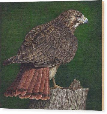 Red Tail Hawk Wood Print by Pat Erickson
