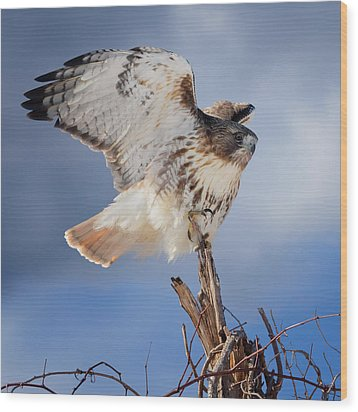 Wood Print featuring the photograph Red Tail Hawk Perch by Bill Wakeley