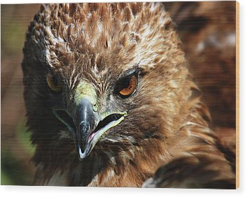 Wood Print featuring the photograph Red-tail Hawk Portrait by Anthony Jones