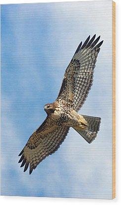 Red Tail Hawk Wood Print by Randall Ingalls