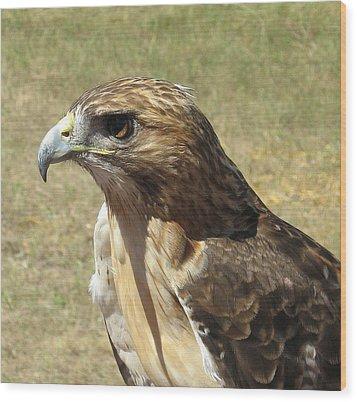 Red Tail Hawk Wood Print by Rebecca Shupp