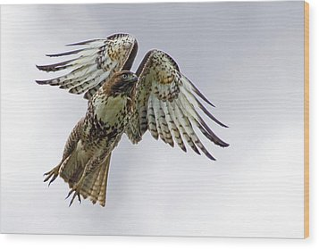 Red Tail Takeoff Wood Print by Randall Ingalls