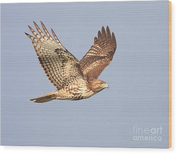 Red Tailed Hawk 20100101-1 Wood Print by Wingsdomain Art and Photography