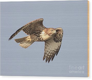 Red Tailed Hawk 20100101-2 Wood Print by Wingsdomain Art and Photography