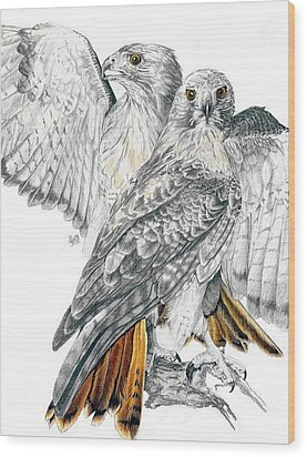Red-tailed Hawk Wood Print by Barbara Keith