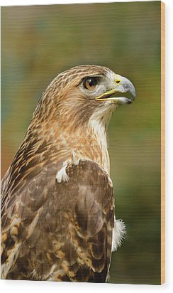 Wood Print featuring the photograph Red-tailed Hawk Close-up by Ann Bridges