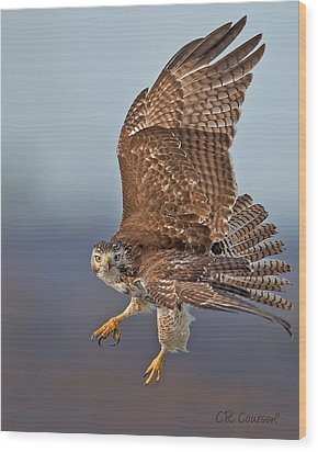 Red-tailed Hawk In Flight Wood Print by CR  Courson