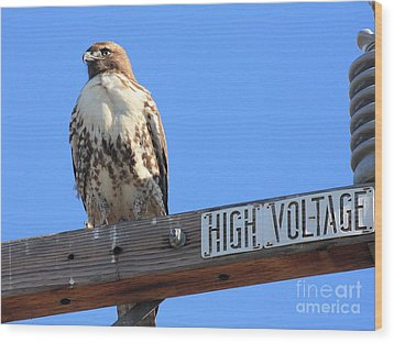 Red Tailed Hawk On High Voltage Wood Print by Wingsdomain Art and Photography