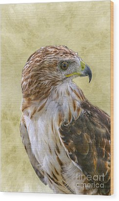 Red Tailed Hawk Wood Print by Randy Steele