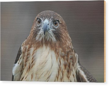 Wood Print featuring the photograph Red Tailed Hawk by Richard Bryce and Family