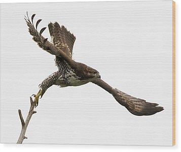 Red-tailed Hawk Swoosh Wood Print