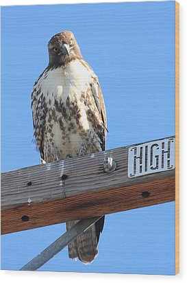 Red Tailed Hawk . What You Lookin At Wood Print by Wingsdomain Art and Photography