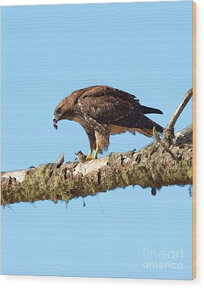 Red-tailed Hawk With Prey Wood Print by Betty LaRue