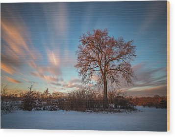 Wood Print featuring the photograph Red Tree by Davorin Mance