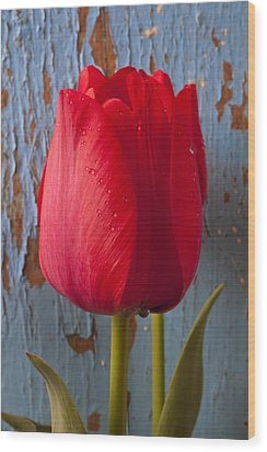 Red Tulip Wood Print by Garry Gay