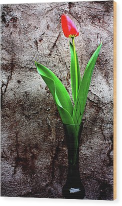 Wood Print featuring the photograph Red Tulip by Gray  Artus