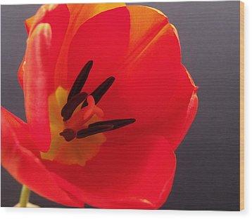Red Tulip IIi Wood Print by Anna Villarreal Garbis