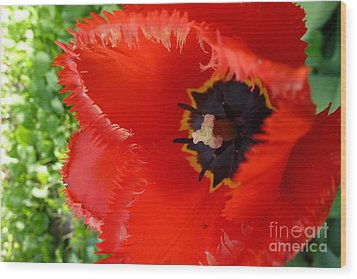 Wood Print featuring the photograph Red Tulip by Jean Bernard Roussilhe