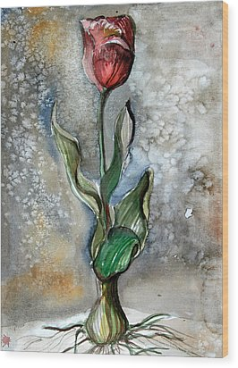 Red Tulip Wood Print by Mindy Newman