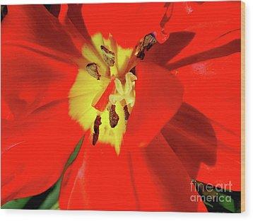Red Tulip Wood Print by Nina Ficur Feenan