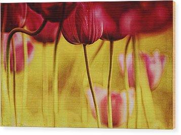 Red Tulips Wood Print by Iris Greenwell