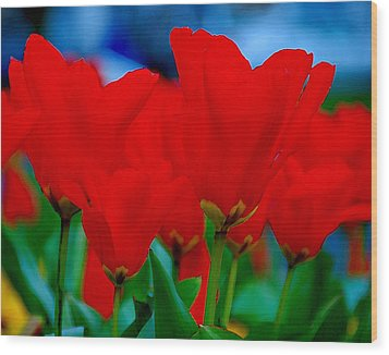 Wood Print featuring the photograph Red Tulips by JoAnn Lense