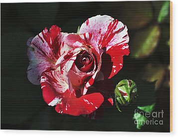 Red Verigated Rose Wood Print