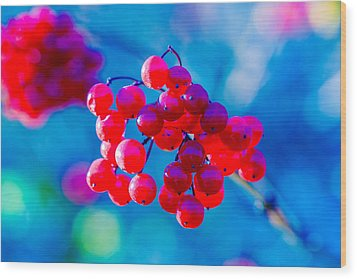 Wood Print featuring the photograph Red Viburnum Berries by Alexander Senin