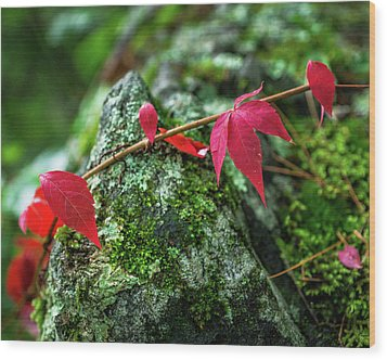 Wood Print featuring the photograph Red Vine by Bill Pevlor