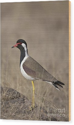 Red-wattled Lapwing Wood Print