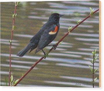 Red Wing Black Bird Wood Print
