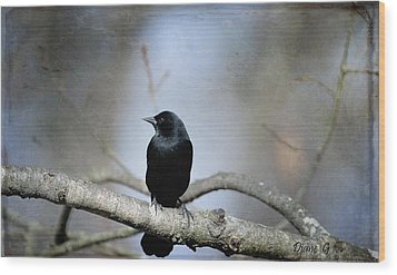 Red-winged Blackbird Wood Print by Diane Giurco