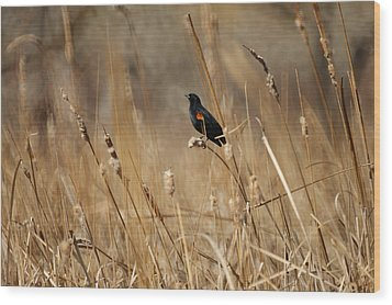 Red Winged Blackbird Wood Print by Ernie Echols
