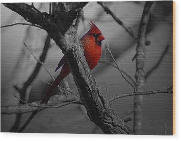 Redbird Wood Print by Shawn Wood