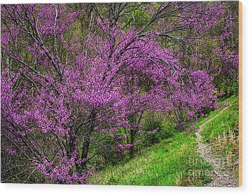 Wood Print featuring the photograph Redbud And Path by Thomas R Fletcher