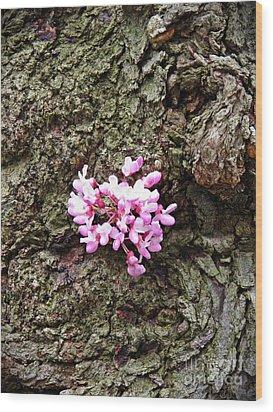 Redbud Flowers 1  Wood Print by Sarah Loft