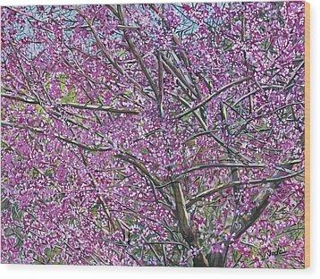 Redbud Tree Wood Print by Nadi Spencer