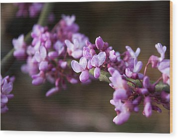 Wood Print featuring the photograph Redbuds In March by Jeff Severson