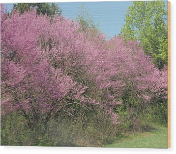 Wood Print featuring the photograph Redbuds In West Virginia by Beth Akerman