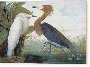 Reddish Egret, Wood Print by Granger