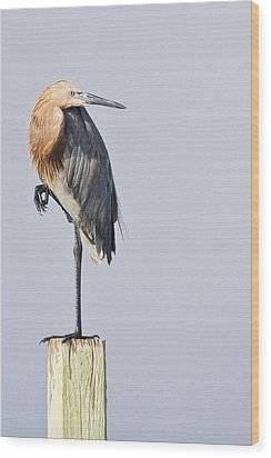 Wood Print featuring the photograph Reddish Egret On Piling by Bob Decker