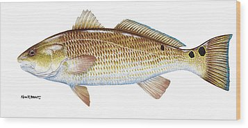 Redfish Wood Print