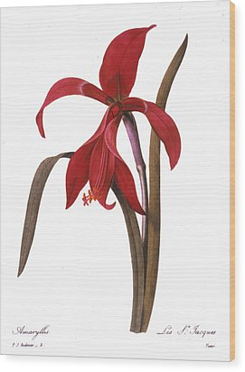 Redout�: St. James Lily Wood Print by Granger