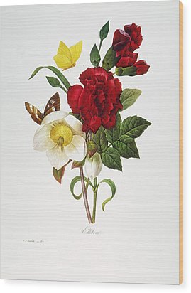 Redoute: Hellebore, 1833 Wood Print by Granger