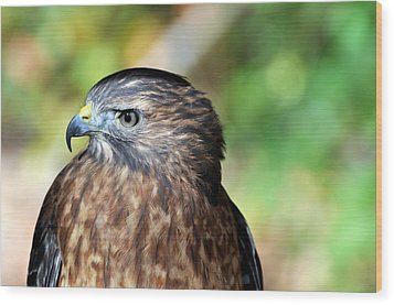 Redtail Wood Print by Marty Koch
