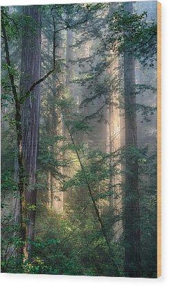Redwood Network Wood Print