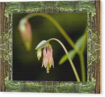 Wood Print featuring the photograph Redwood Columbine by Bell And Todd