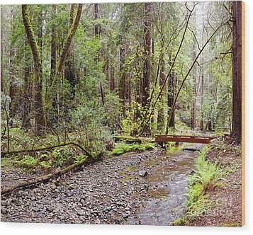 Redwood Creek Flowing Through Muir Woods National Monument - Mill Valley Marin County California Wood Print